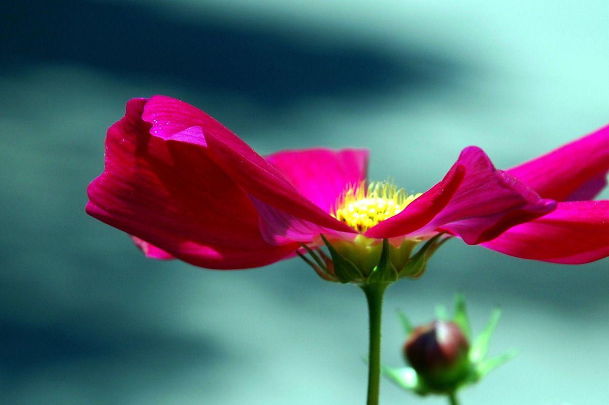 fleur et art