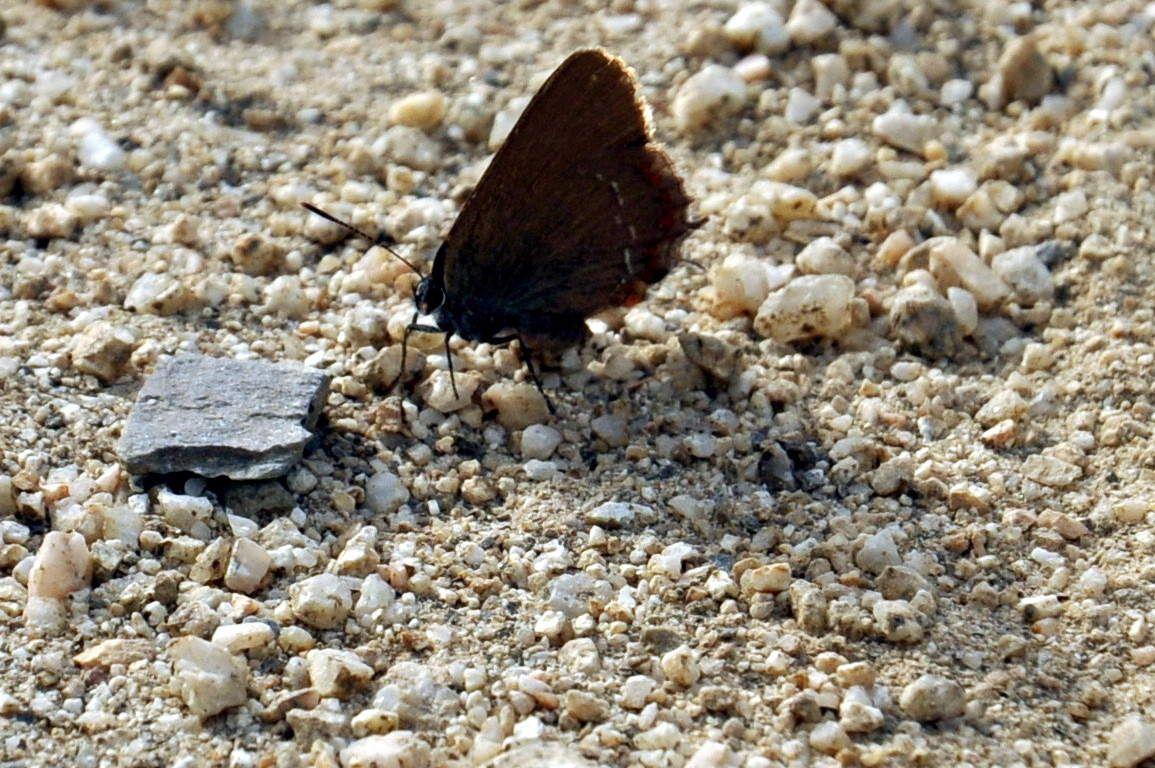 Un premier papillon.