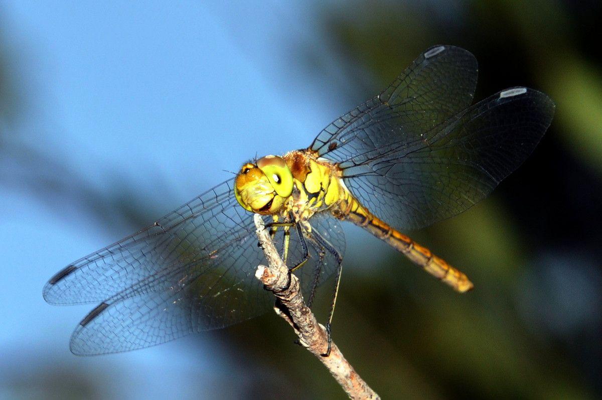 Moment magique avec la libellule.