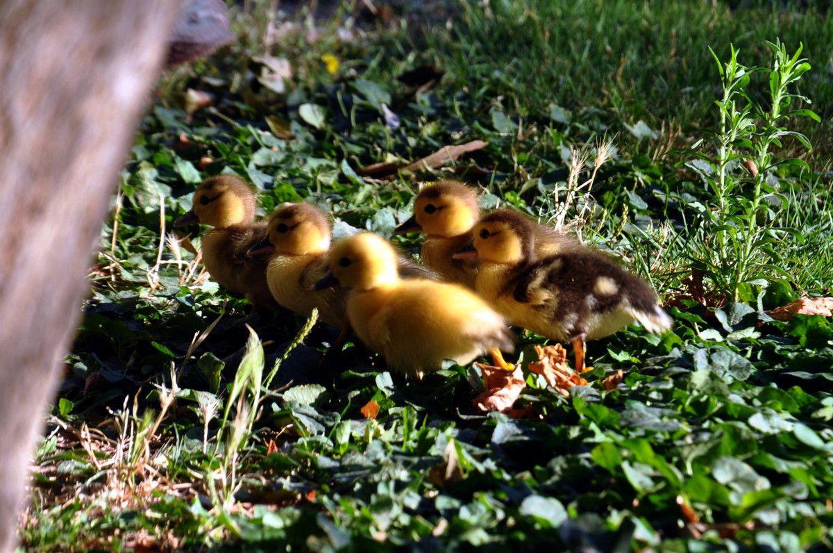 5 petits qui marchent bien droit.