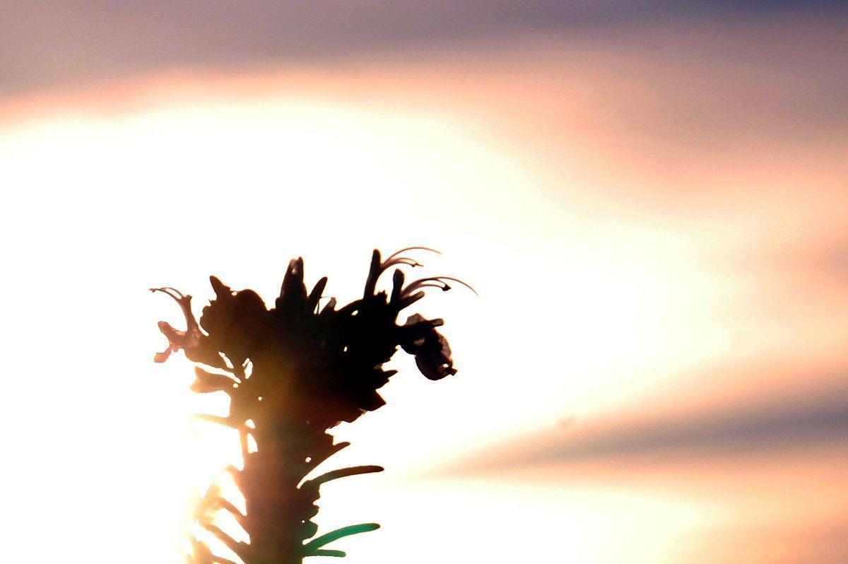 Un gros plan de plus en plus dur à prendre avec le soleil qui monte.