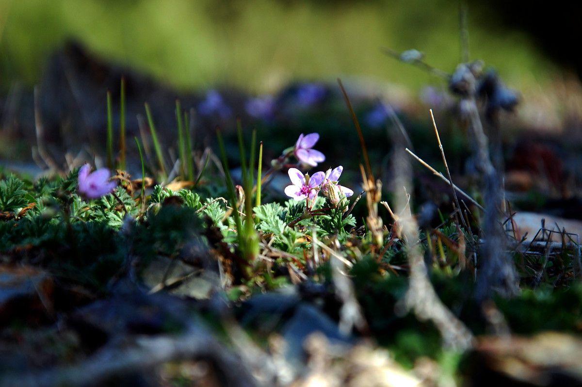 Petite mais belle fleur sur l'orri.