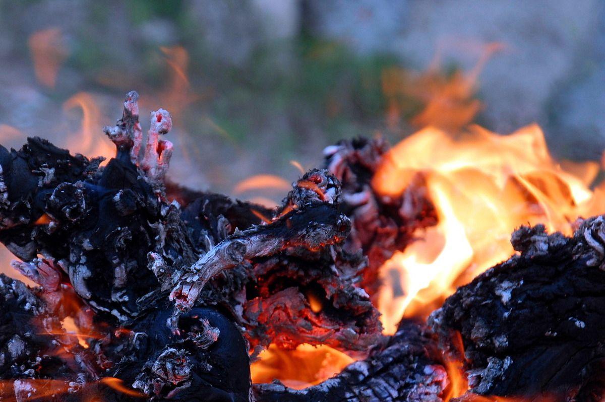 les ceps de vigne et le feu.