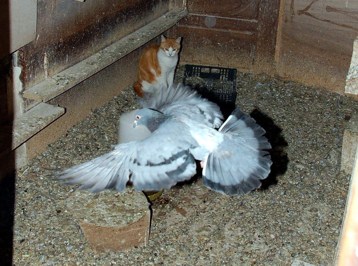 Très beau ce pigeon.