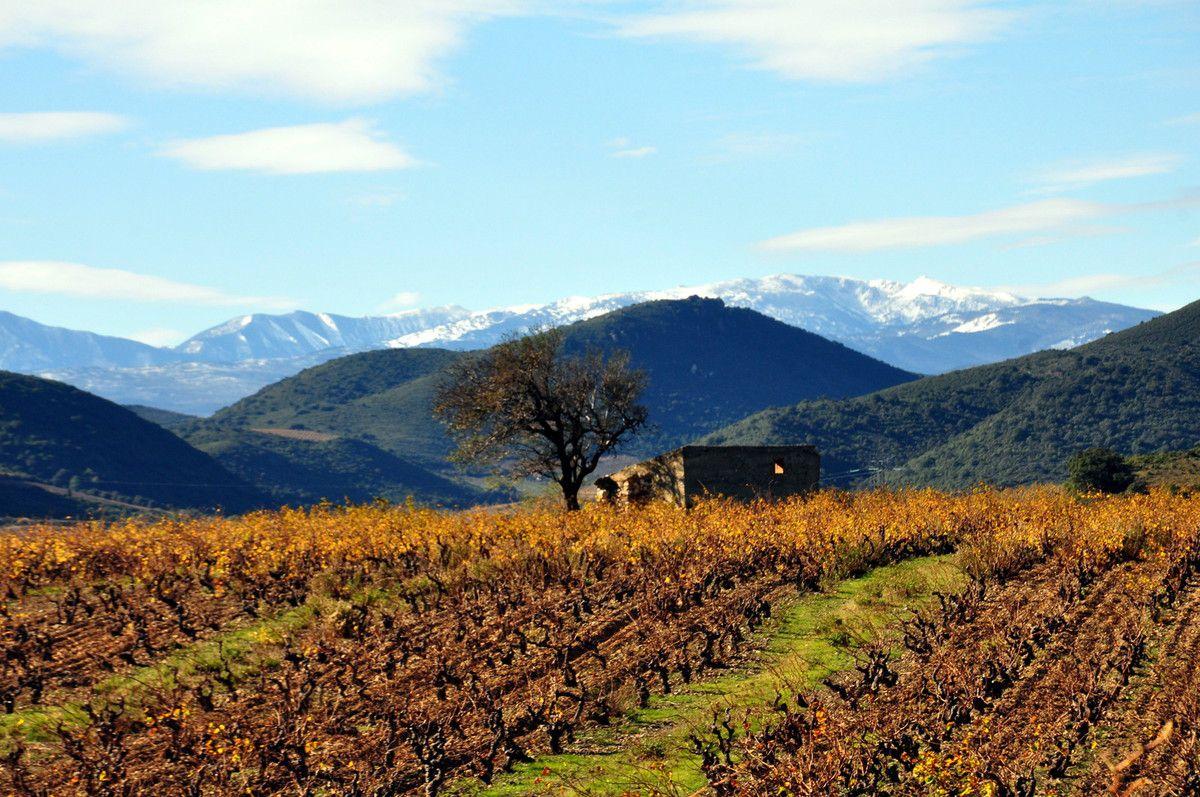 De la vigne à la montagne.