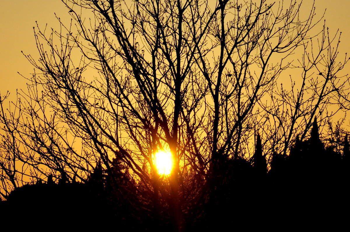 Soleil et arbre dernière.