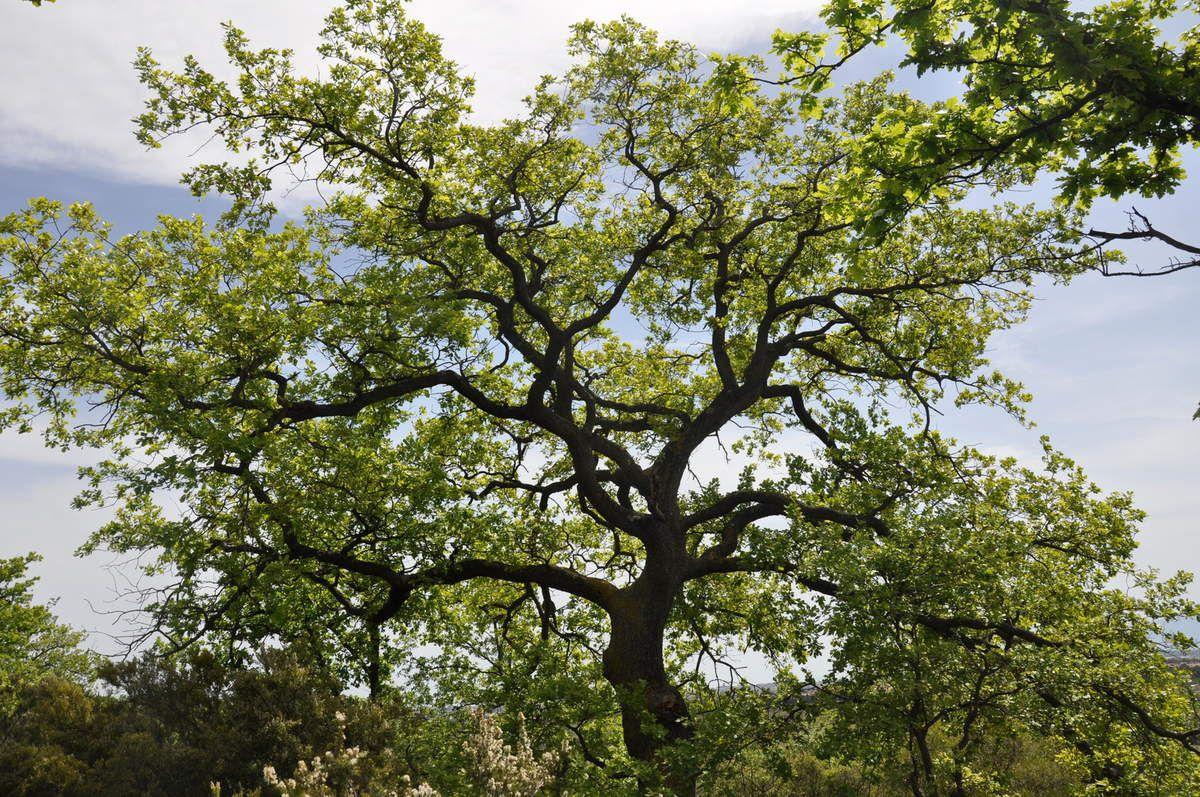 Cet arbre est magnifique.