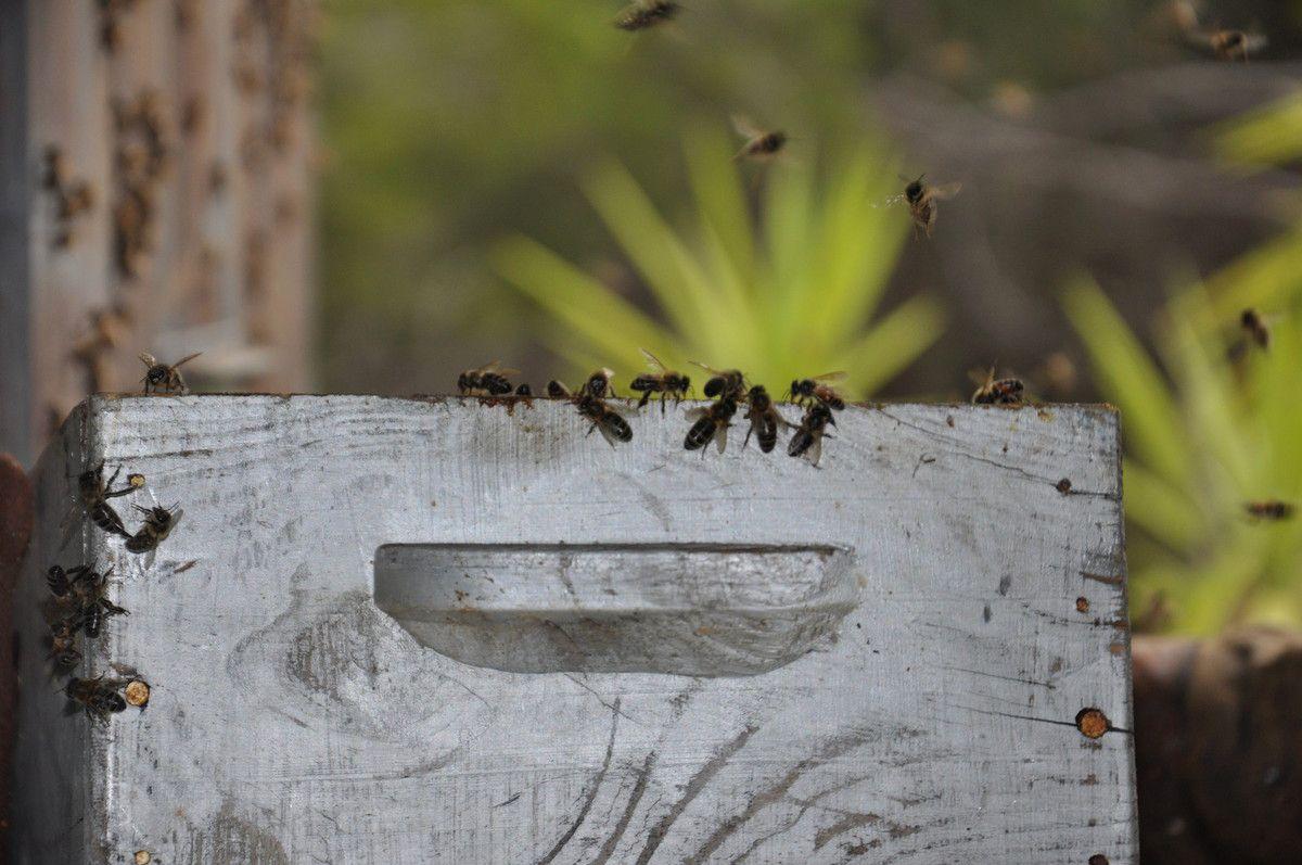 Les abeilles entre dans la ruche.