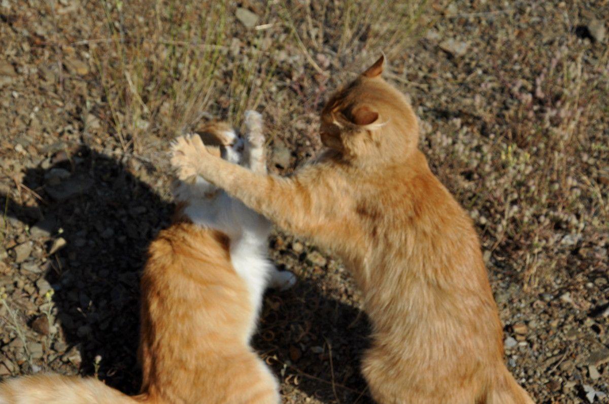 Retour chez les rouquins, le petit Chachou joue avec sa mère.