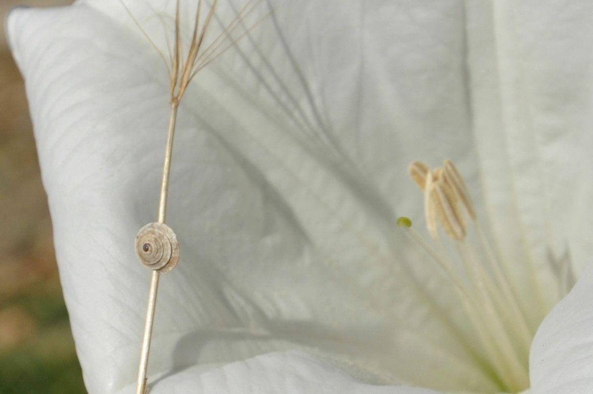 Ombre et fleur