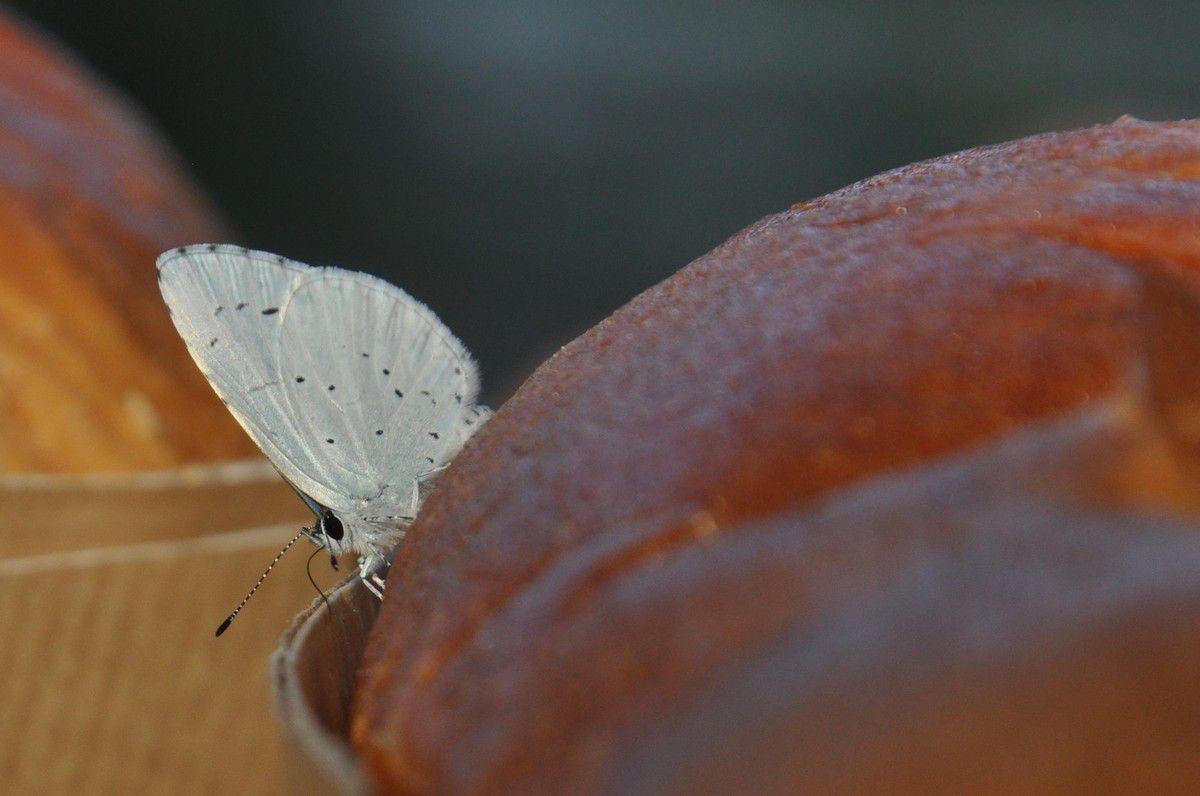 La balade du papillon sur le pain.