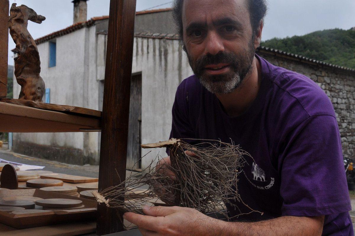 Présentation du bois de dorycium