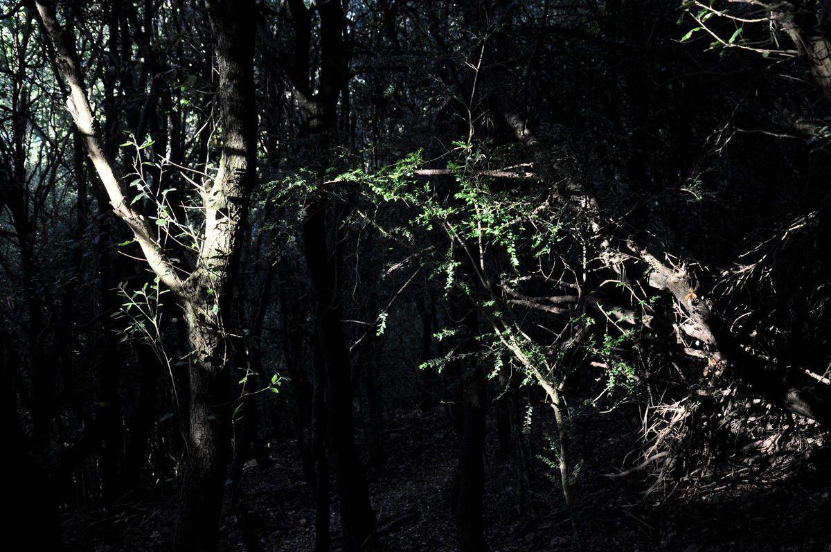 Belle forêt sombre en cette fin d'après-midi.