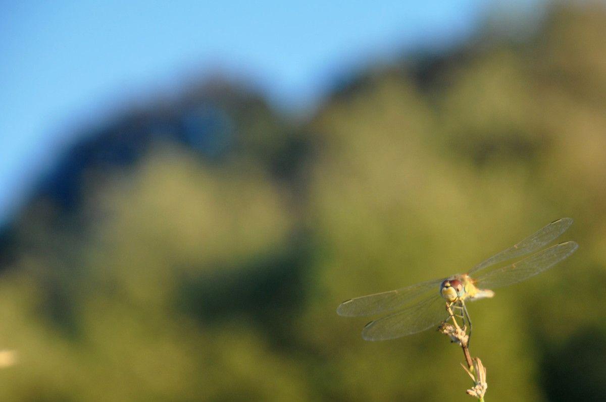 Vert nature, ciel bleu et libellule.