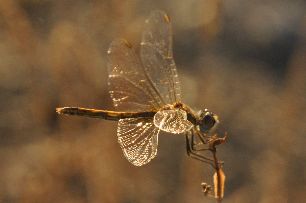 Superbe les ailes.