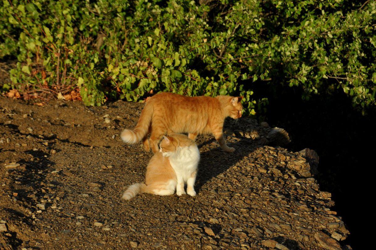 La famille chat au soleil après la pluie.