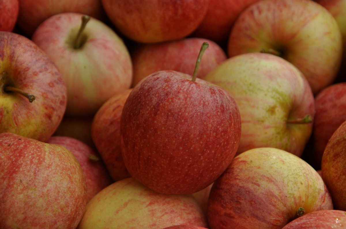 Du rouge au faune pour ses pommes.