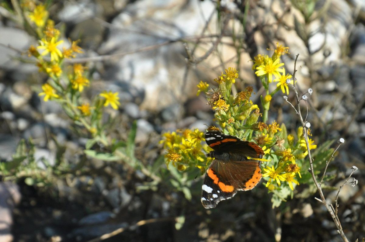 Bien joli ce papillon.