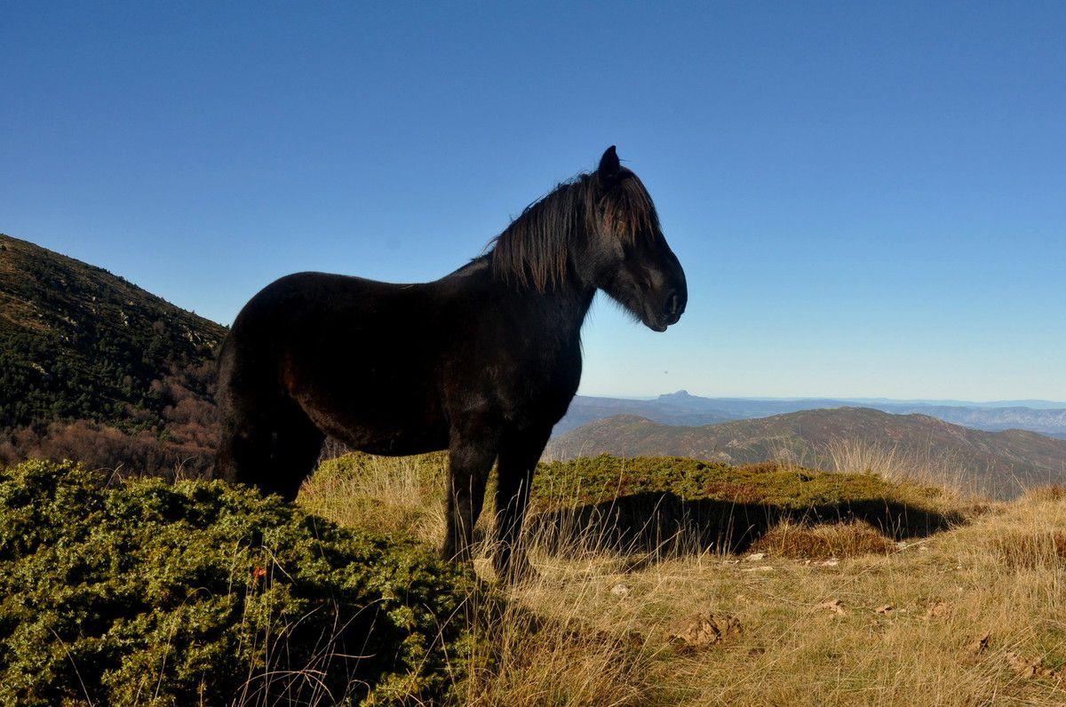 Qu'il est beau ce cheval.