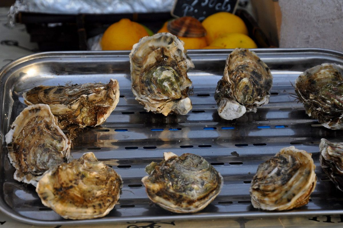 Les huîtres de Lecate.