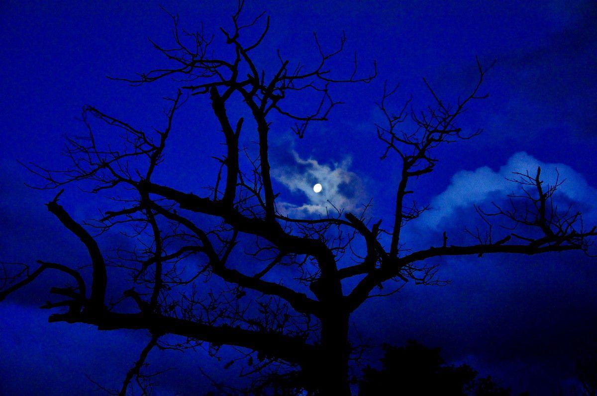 Arbre et lune.