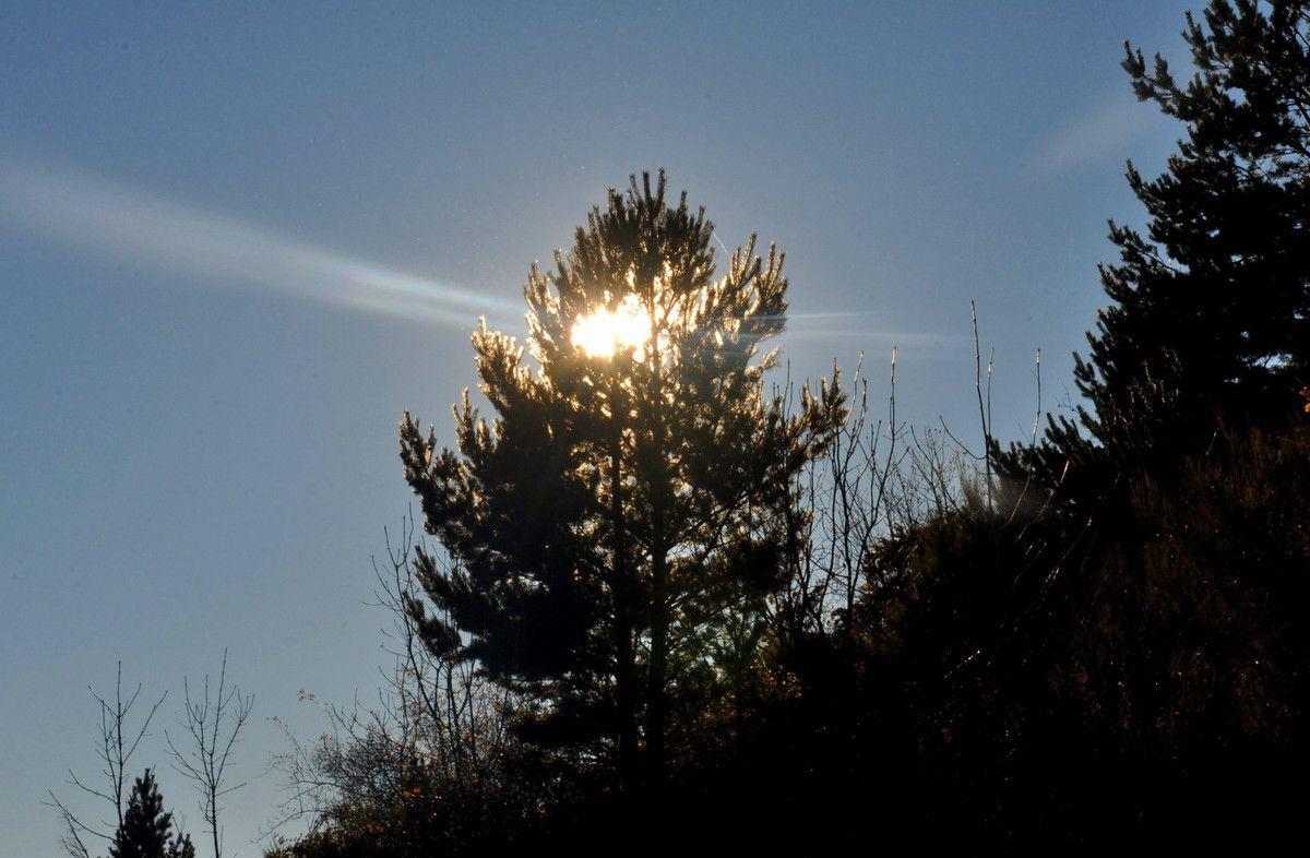 Avant la tour à signaux, voici l'arbre sapin ou pin phare.