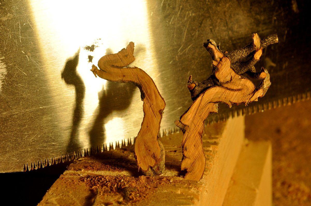 La danse des cygnes avec le callune.