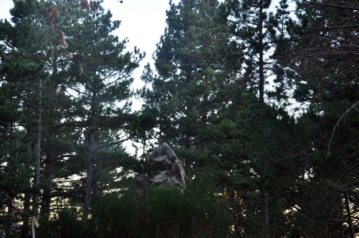 Une pierre haute au milieu des arbres.