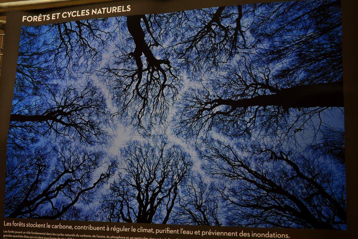 Ciel et arbres.
