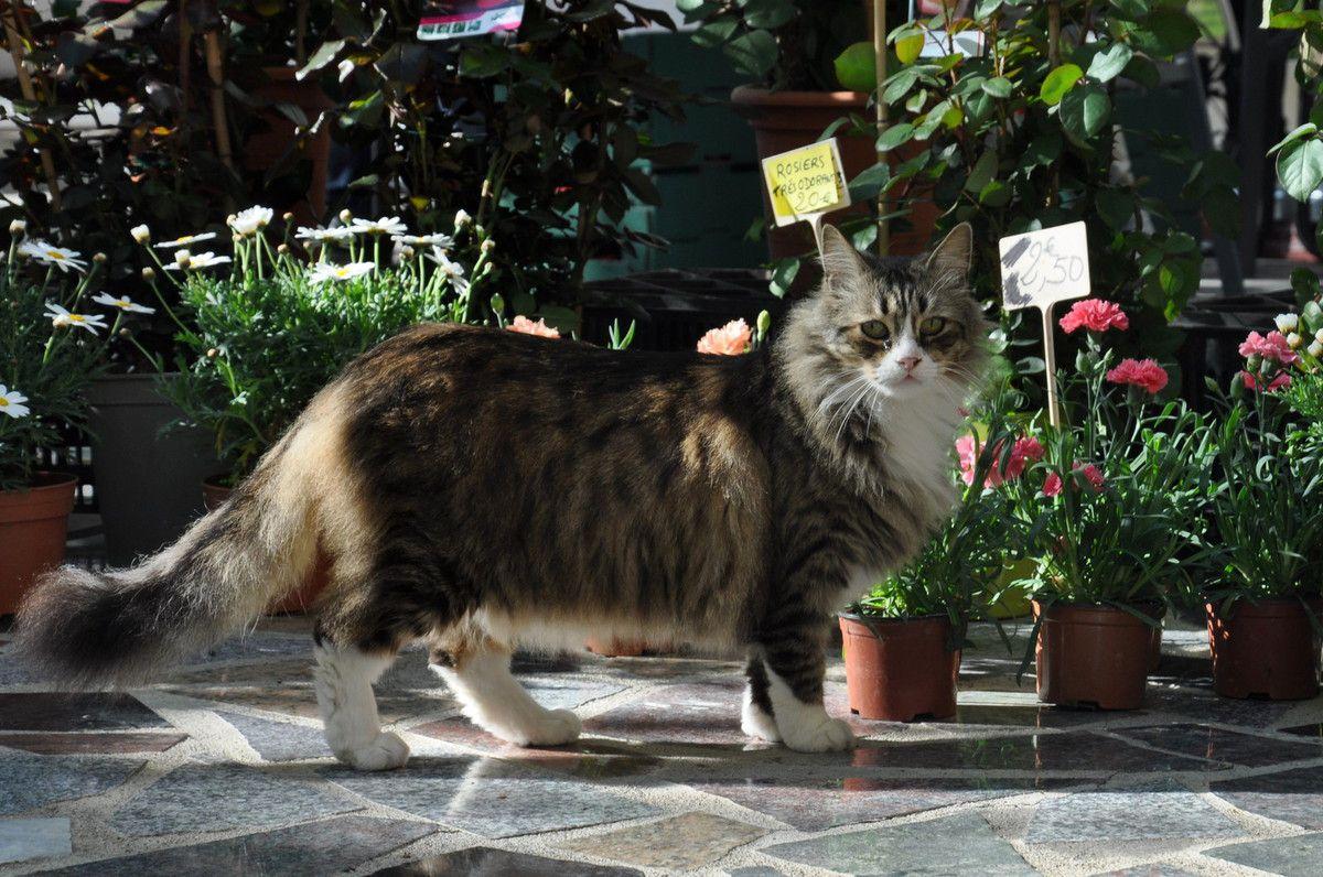 Même les visiteurs félins peuvent venir, le chat sait bien que c'est bon ici.