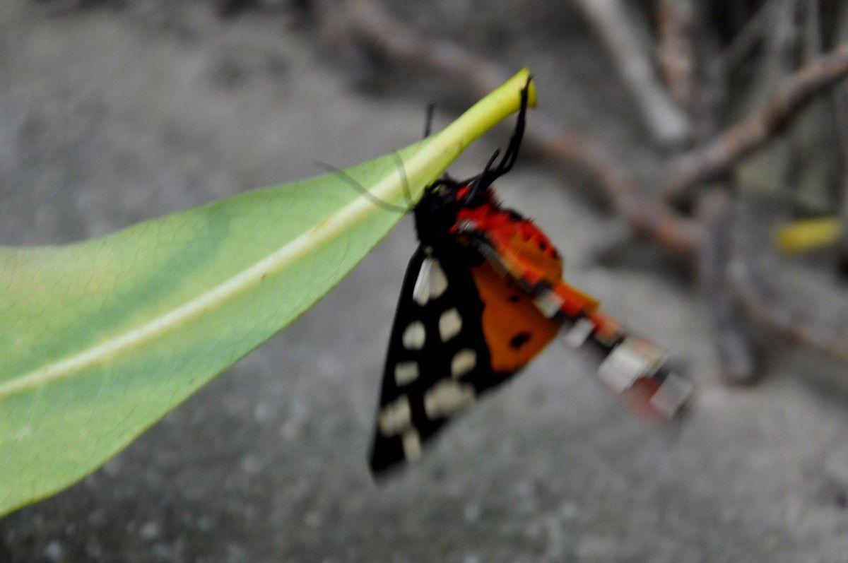 Ce papillon est une star.