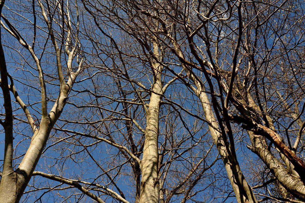 Forêt encore en hiver et ciel bleu.