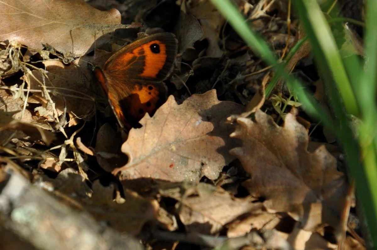 Plaisir papillon au sol.