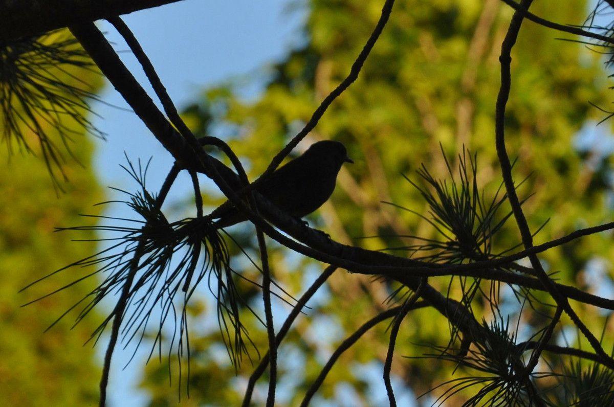 Trop bien petit oiseau.