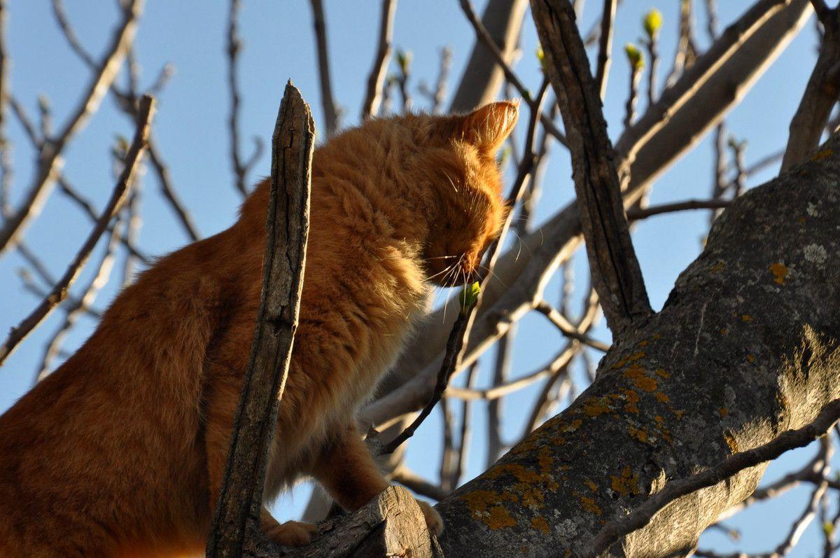 Comment chat le figuier ne montre pas grand chose en cette époque.