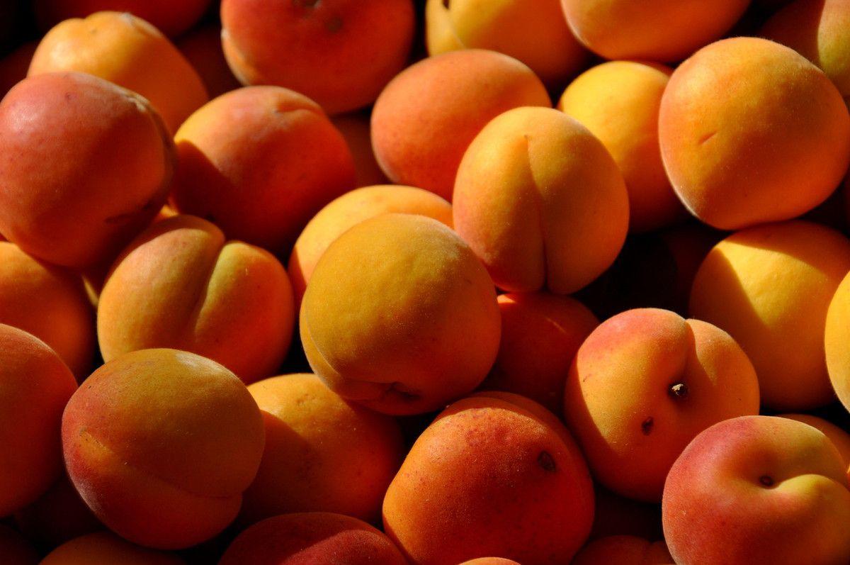 Abricots.