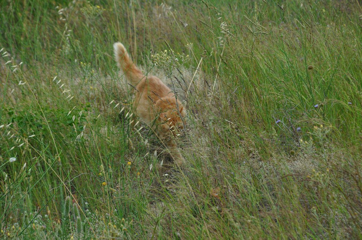A la vitesse du chat en balade.