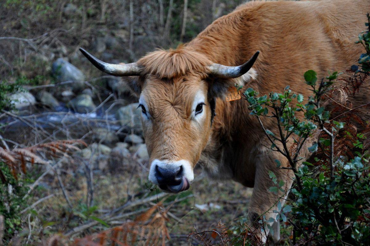 C'est vache comme portrait ?