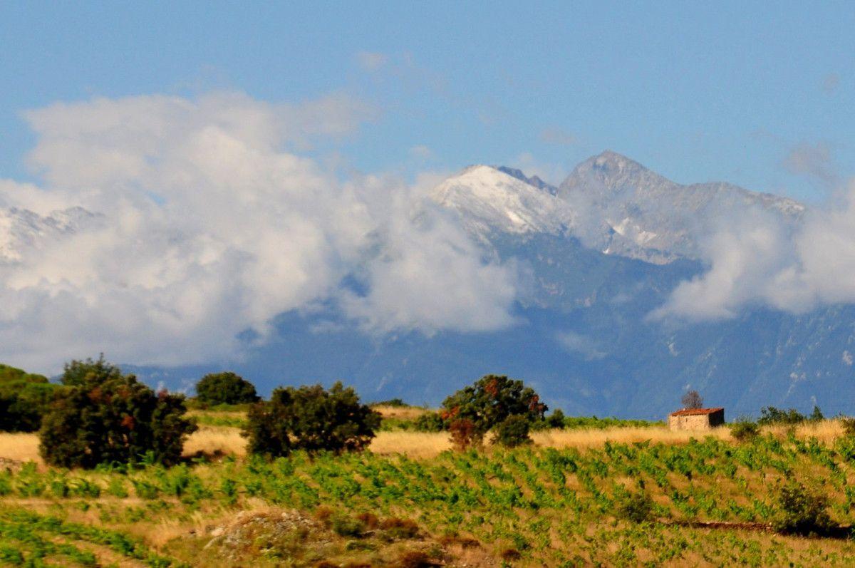 Canigou avec devant des vignes au dessus de Montner