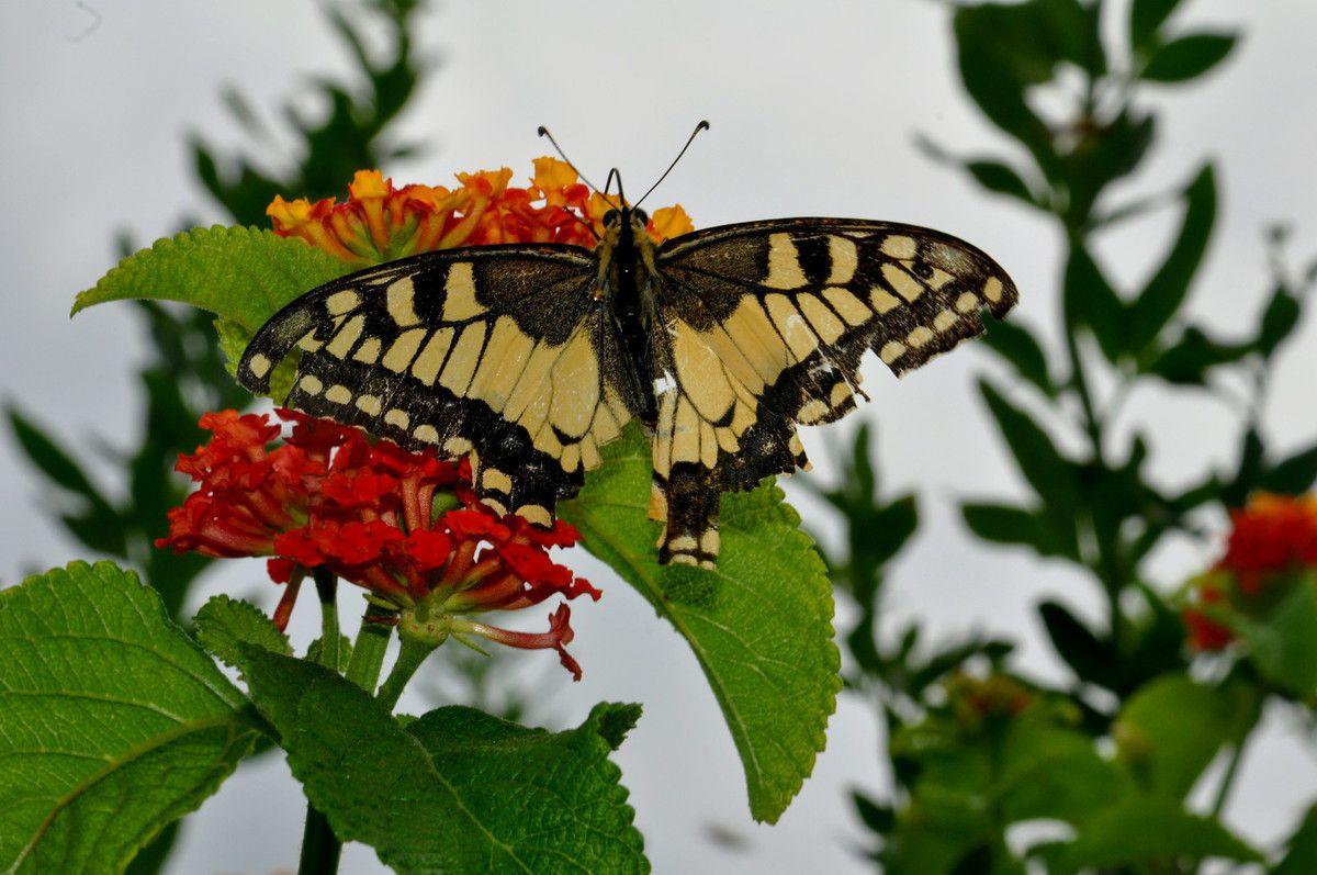 Pause et effet papillon