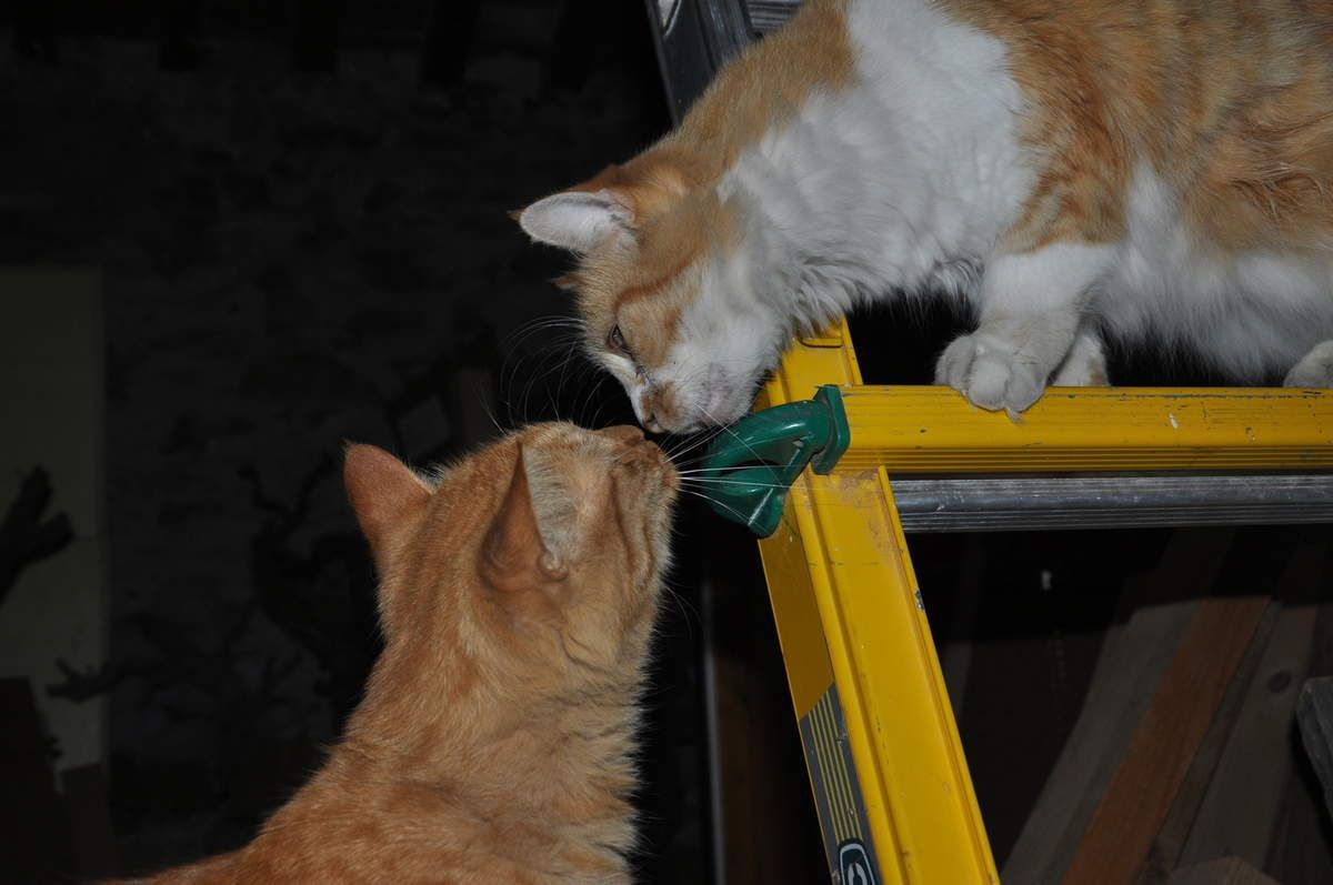 Amour chat !