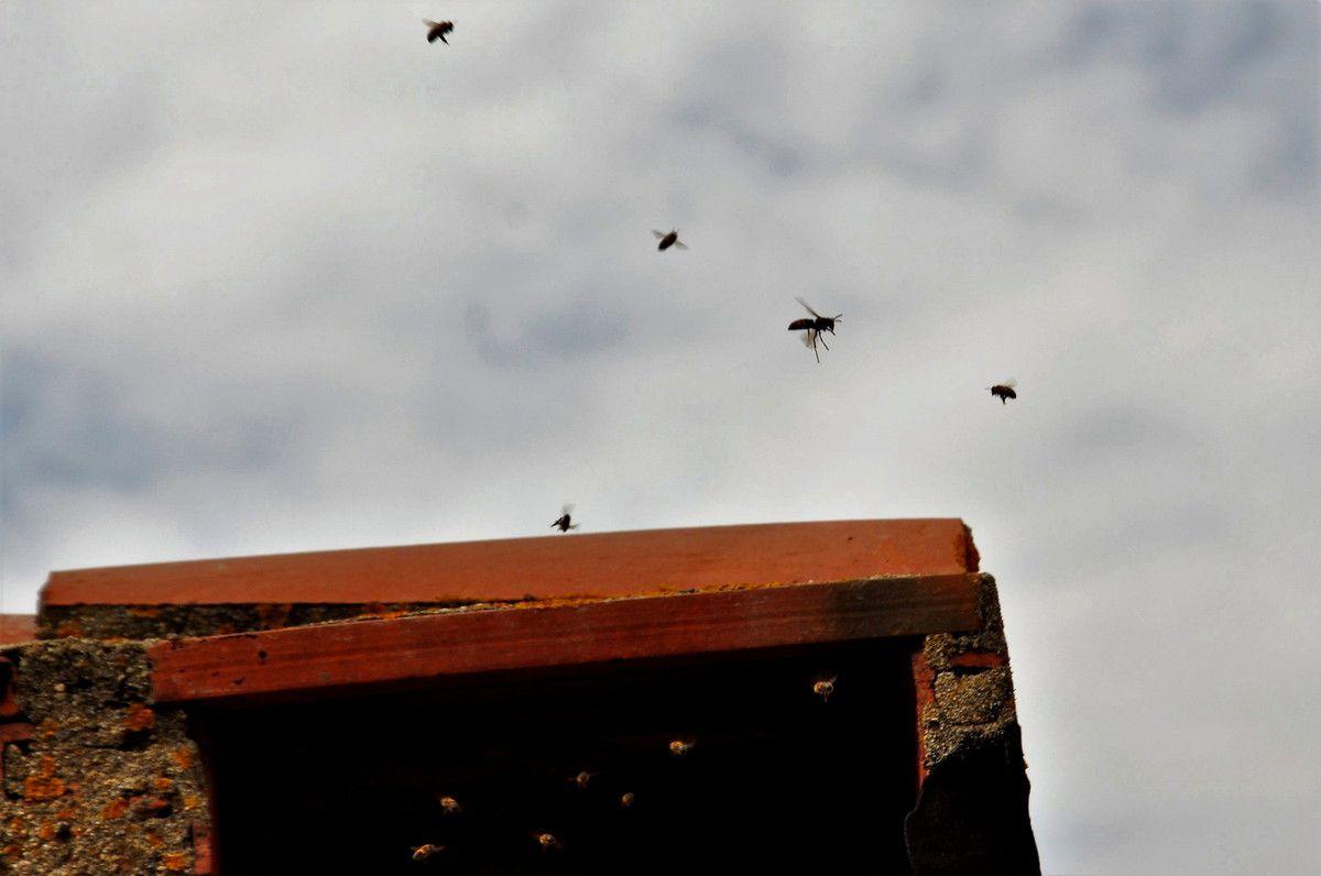 Plus les abeilles volent, plus c'est impressionnant, sous la lucarne avec le réflexe de baisser la tête.