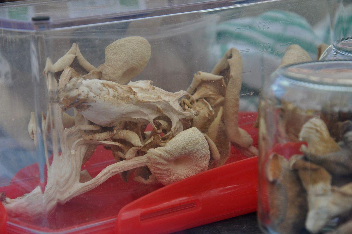 Les champignons lors de la dernière fête.