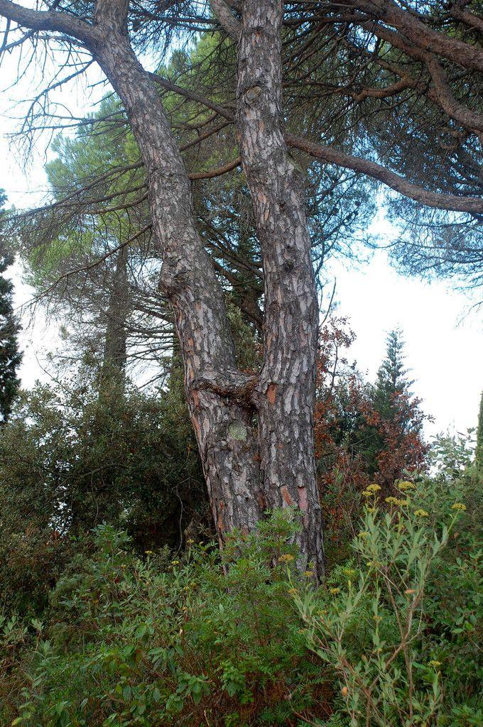 Un arbre ou deux ?