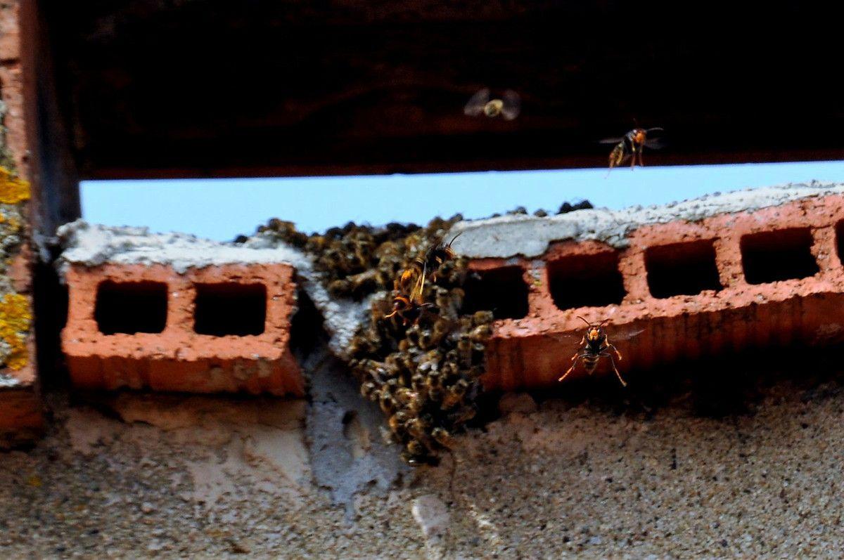C'est une lutte devant les abeilles.