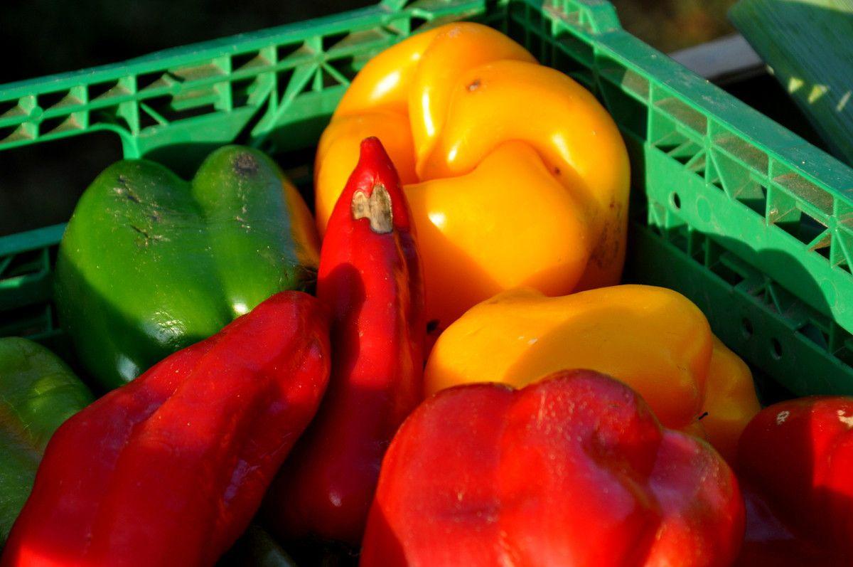 Les belles couleurs dans l'assiette (enfin dans un futur).