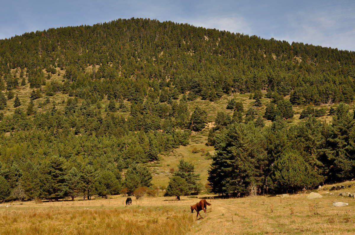 un cheval deux chevaux, bon il me fuit.