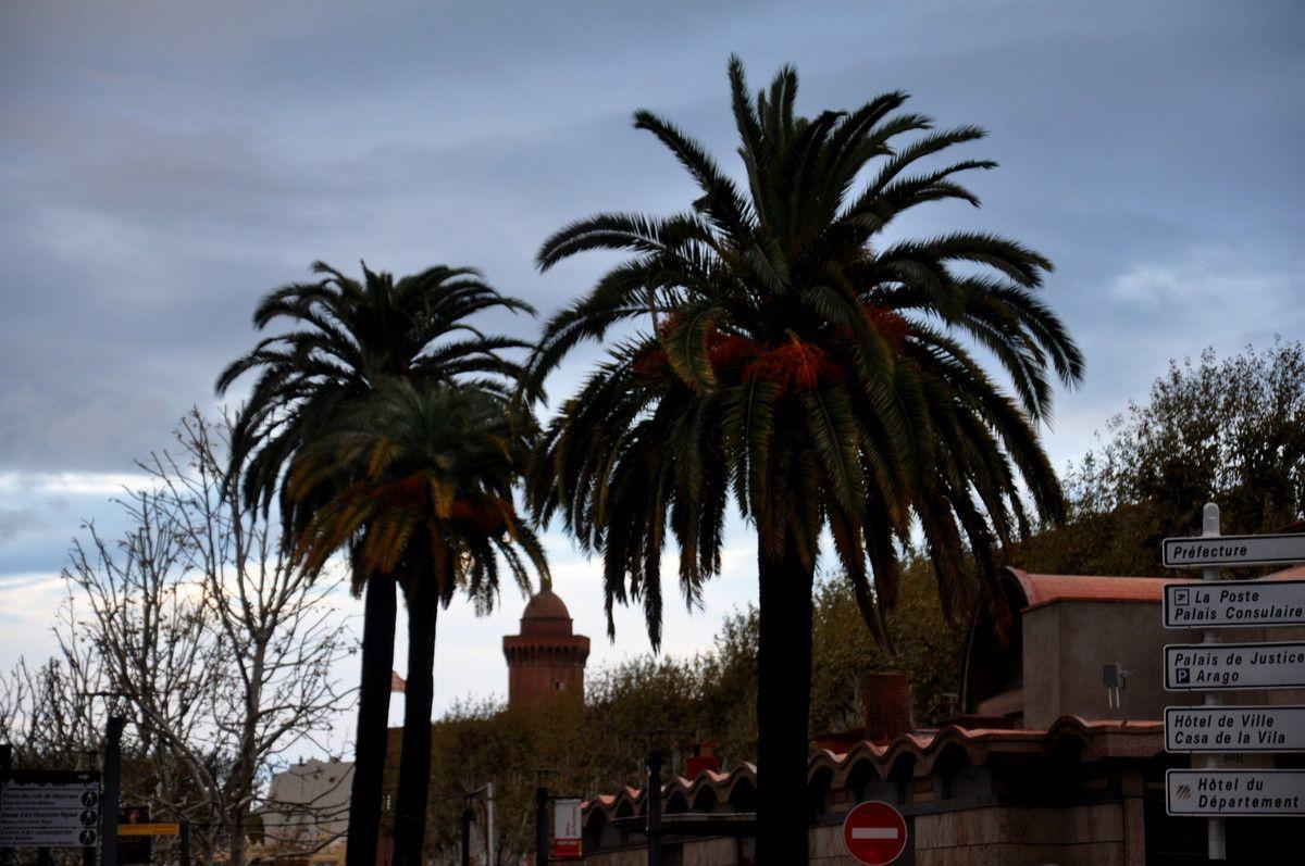 Entre les palmiers, le haut du Castillet.