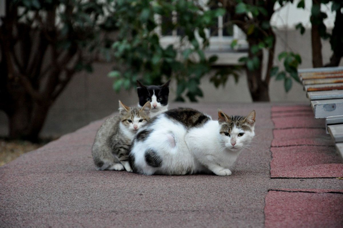 Une famille chat.