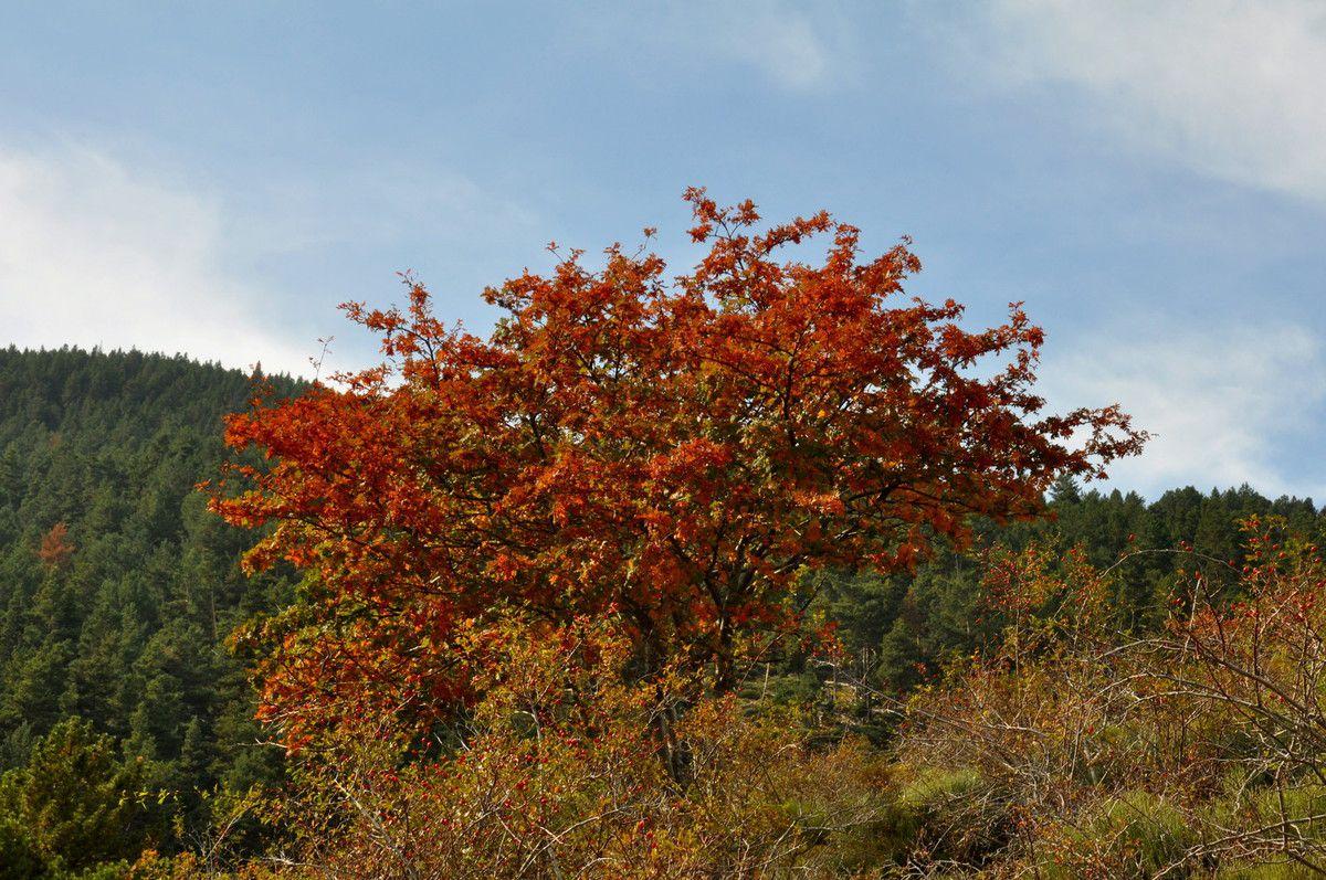 Voici l'arbre en question.